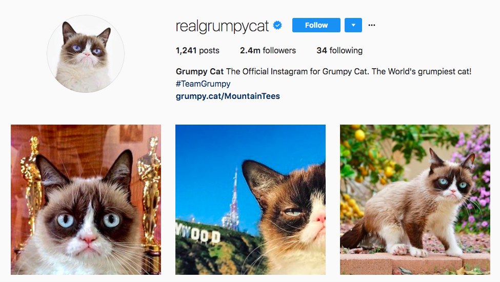 Grumpy Cat best influencers 2017