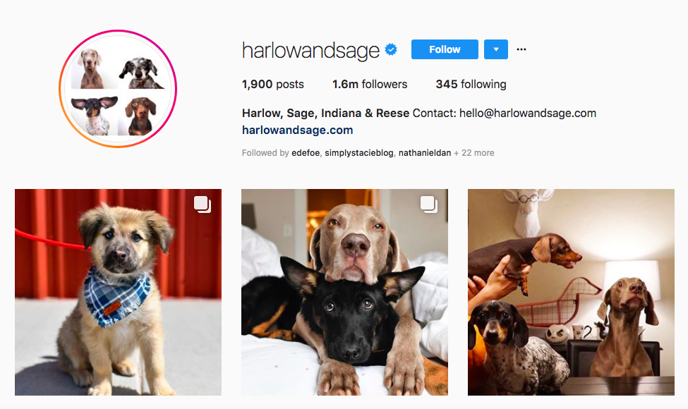 Harlow, Sage, Indiana & Reese top pet influencers