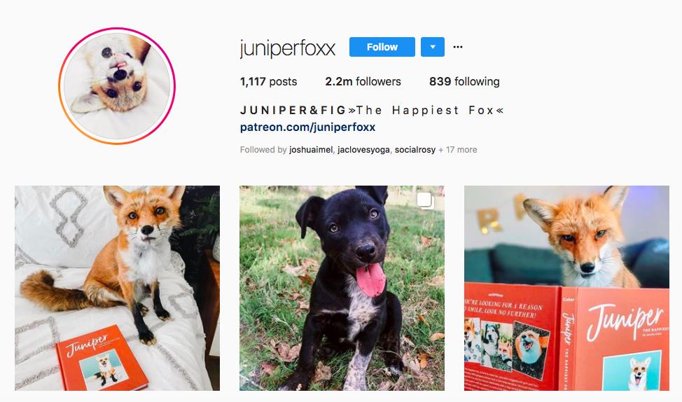 Juniper Fox Top Pet Influencers