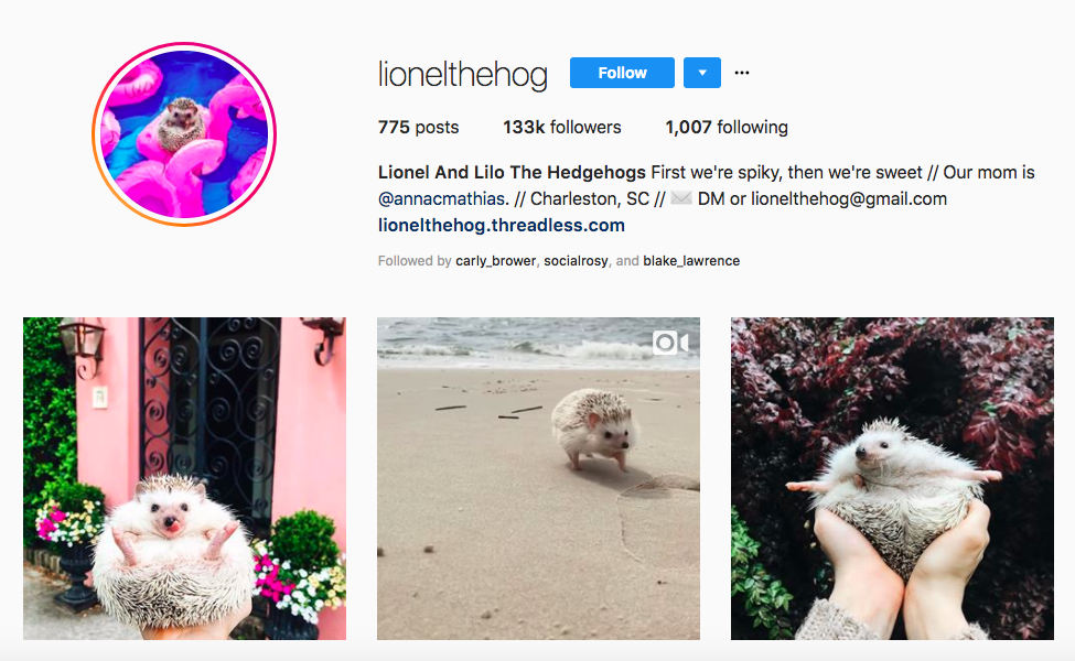 Lionel And Lilo The Hedgehogs top pet influencers