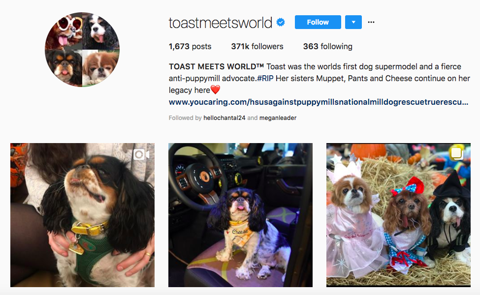 TOAST MEETS WORLD top pet influencers