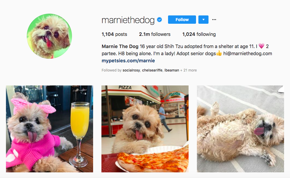 Marnie The Dog Top Pet Influencers