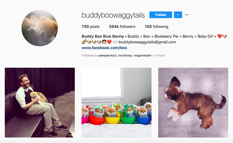 Buddy Boo Blue Benny Top Pet Influencers