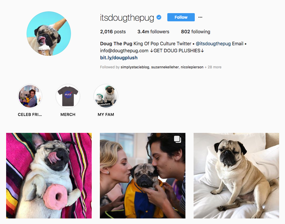 Doug The Pug top online influencers