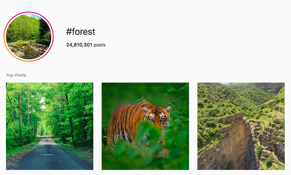 best outdoor instagram hashtags #forest
