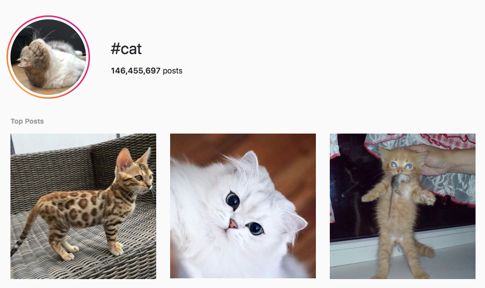 #cat top instagram hashtags
