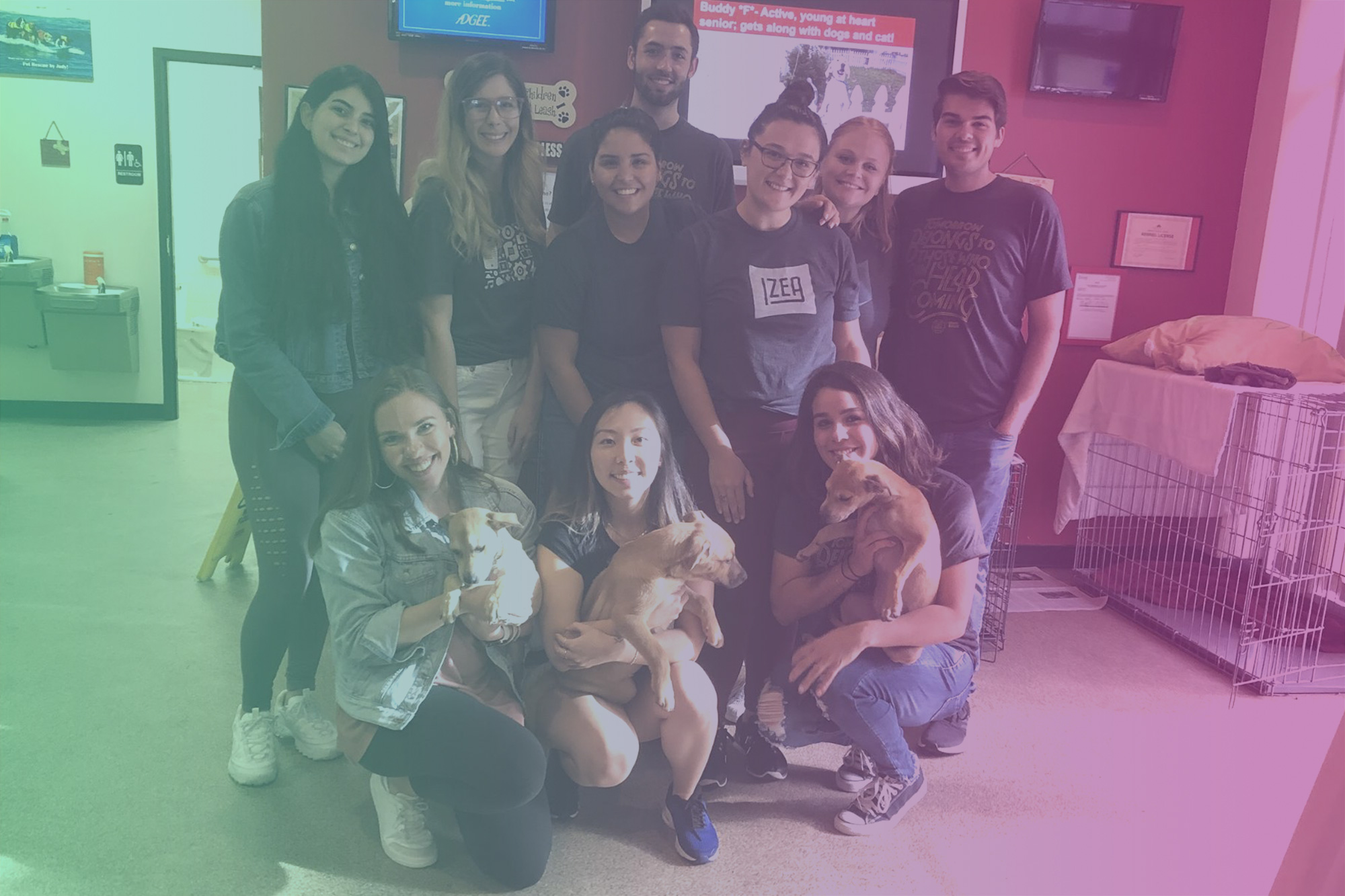 IZEA Partners with Pet Rescue by Judy and The Chicago Canine Rescue
