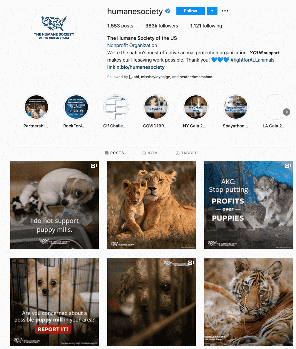 humane society-charity influencers